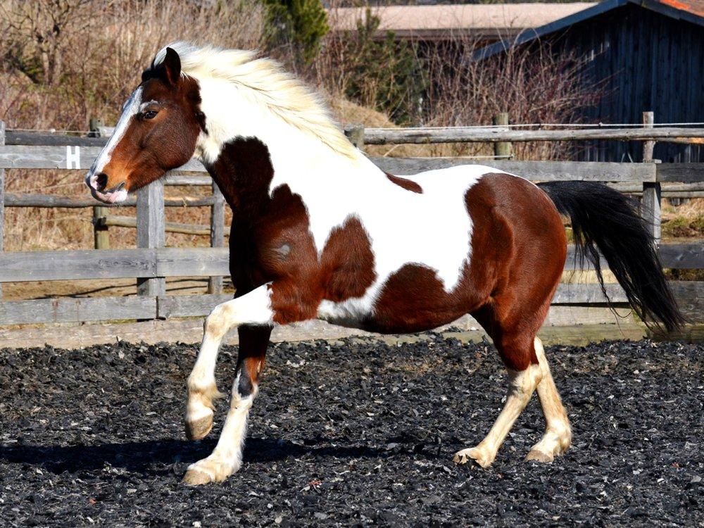 pippi langstrumpf affe pferd